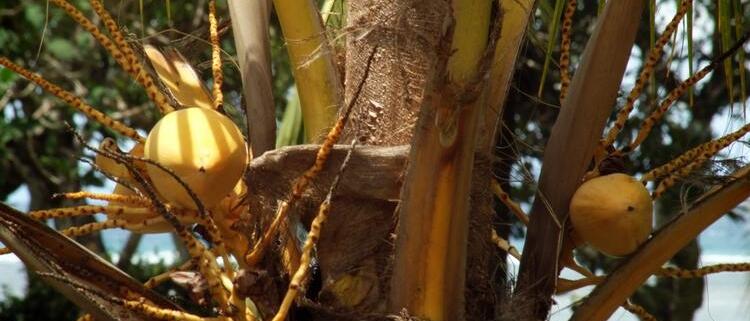 Immobilier à la Réunion : zoom sur Le Tampon
